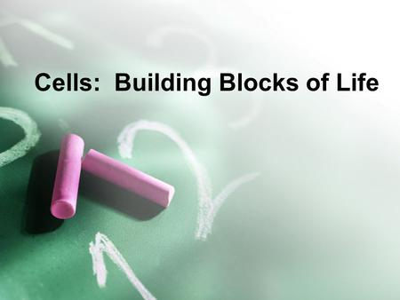 Cells: Building Blocks of Life. Objective 2.0 Identify functions of organelles found in eukaryotic cells, including the nucleus, cell membrane, cell wall,