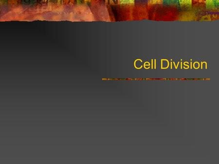 Cell Division. Why divide? Characteristic of life Continuity Growth (zygote → multicellular org) Repair, renewal, replacement.