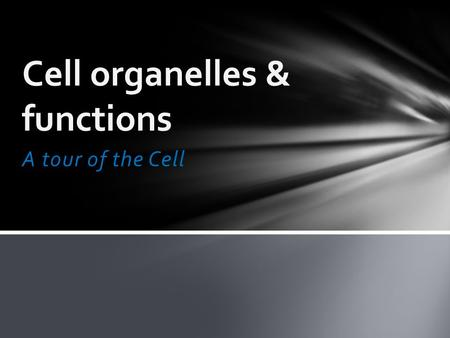 A tour of the Cell Cell organelles & functions. Differences between plant and animal cells: Animal lacks Plant lacks Cell wall Centrioles Large central.