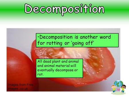 All dead plant and animal and animal material will eventually decompose or rot. Decomposition is another word for rotting or 'going off' Images from Free.