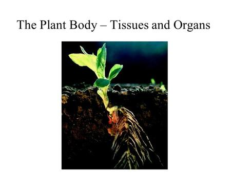 The Plant Body – Tissues and Organs. Cooksonia – 408 MYA.