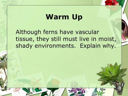 Warm Up Although ferns have vascular tissue, they still must live in moist, shady environments. Explain why.