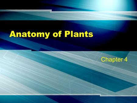 Anatomy of Plants Chapter 4. Prokaryotes No membrane enclosed organelles Considered primitive Examples: Bacteria & Blue green algae.