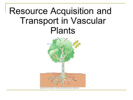 Resource Acquisition and Transport in Vascular Plants.