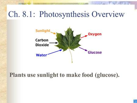 Ch. 8.1: Photosynthesis Overview Plants use sunlight to make food (glucose).