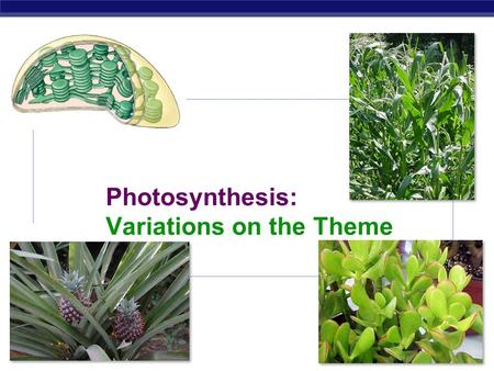 AP Biology 2007-2008 Photosynthesis: Variations on the Theme.