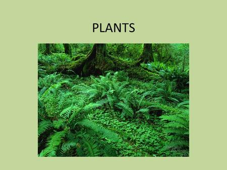 PLANTS. Evolution of Plants Monocots and Dicots.