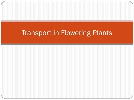 Transport in Flowering Plants. Vascular Bundle Consists mainly of Xylem Phloem Referred to as vascular bundles in stems and steles in roots.