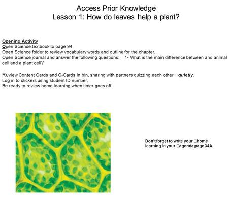 Access Prior Knowledge Lesson 1: How do leaves help a plant? Opening Activity Open Science textbook to page 94. Open Science folder to review vocabulary.