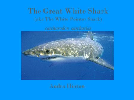 The Great White Shark (aka The White Pointer Shark) carcharodon carcharias Audra Hinton.