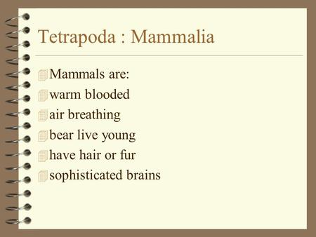 Tetrapoda : Mammalia 4 Mammals are: 4 warm blooded 4 air breathing 4 bear live young 4 have hair or fur 4 sophisticated brains.