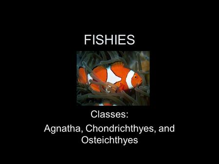 FISHIES Classes: Agnatha, Chondrichthyes, and Osteichthyes.