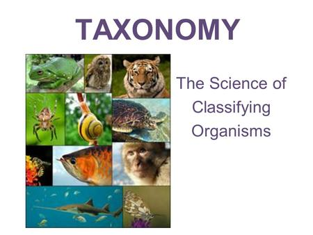 The Science of Classifying Organisms