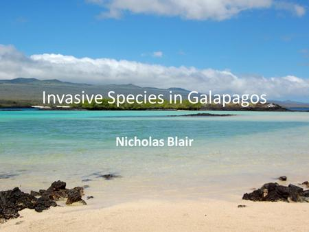 Invasive Species in Galapagos Nicholas Blair. What is an invasive specie? An invasive specie is a specie that has gotten to a certain place and mostly.