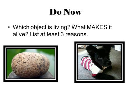 Do Now Which object is living? What MAKES it alive? List at least 3 reasons.