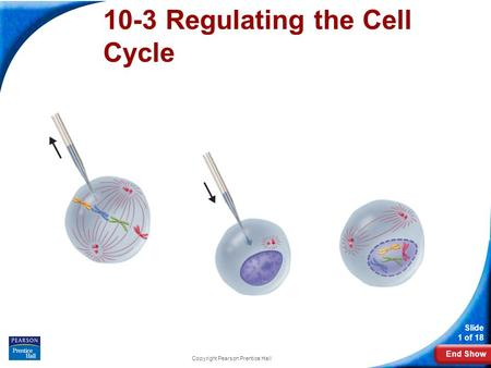 End Show Slide 1 of 18 Copyright Pearson Prentice Hall 10-3 Regulating the Cell Cycle.