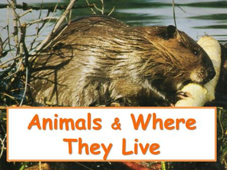 Animals & Where They Live