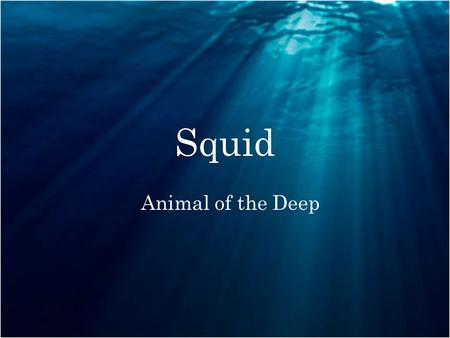 Squid Animal of the Deep. Body Parts Types of Squid There are many types of squid in the world here are the top nine. Giant Squid,Firefly Squid, Vampire.