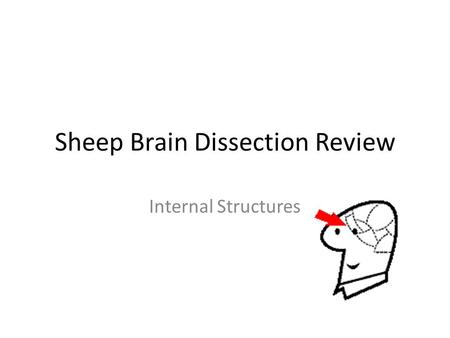 Sheep Brain Dissection Review Internal Structures.