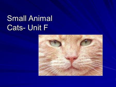 Small Animal Cats- Unit F. Competency 15.00 Use information specific to each breed to choose the best cat for a given use.