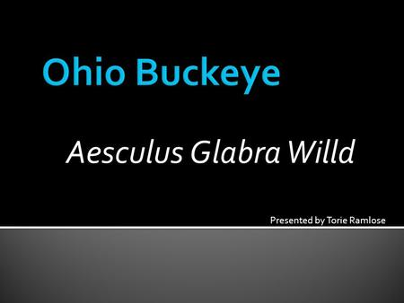 Aesculus Glabra Willd Presented by Torie Ramlose.