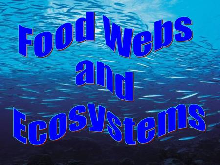 Food Webs and Ecosystems.
