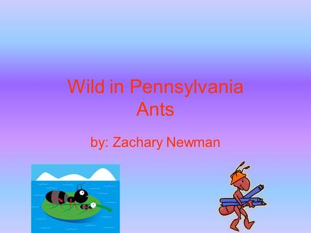 Wild in Pennsylvania Ants by: Zachary Newman. Introduction Do you want to steal from picnics? You can if you are an ant. I hope you are interested in.