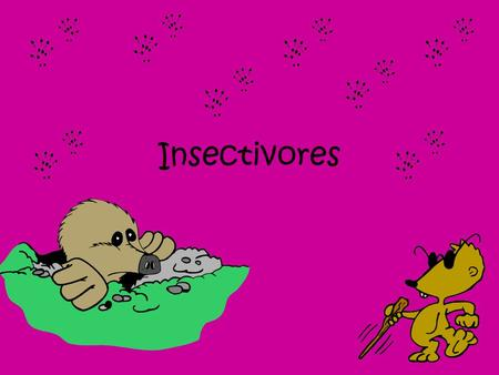 Insectivores. Insectivores are mammals that survive by eating almost nothing except small insects. Shrew Hedgehog Mole Tenrec.