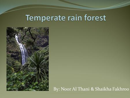 By: Noor Al Thani & Shaikha Fakhroo. How the temperate rainforest looks like 1.