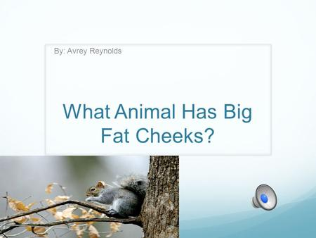 What Animal Has Big Fat Cheeks? By: Avrey Reynolds.