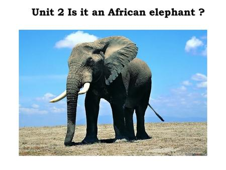 Unit 2 Is it an African elephant ?. How many continents are there in the world? What are they? 亚洲 --- 欧洲 --- 非洲 --- 北美洲 --- 南美洲 --- 南极洲 --- 大洋洲 --- Asia.