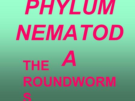 PHYLUM NEMATOD A THE ROUNDWORM S. CHARACTERISTICS TUBULAR SHAPE WITH POINTED ENDS BILATERAL SYMMETRY UNSEGMENTED BODY MOVE IN A WHIP-LIKE MOTION.