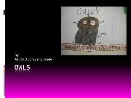 By Astrid, Audrey and Jaede. We will tell you about all kinds of owls. Snowy owls,Elf owls and other stuff! You will learn what owls eat, how they fly.