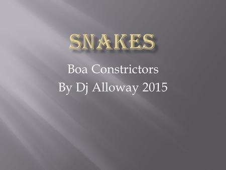 Boa Constrictors By Dj Alloway 2015. Boas eat lizards, mice, birds, rats, small pigs, and bats. They eat by camoflauging themselves then striking.