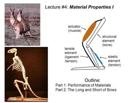Structural element (bone) tensile element (ligament /tendon) elastic element (tendon) actuator (muscle) Lecture #4: Material Properties I Outline: Part.