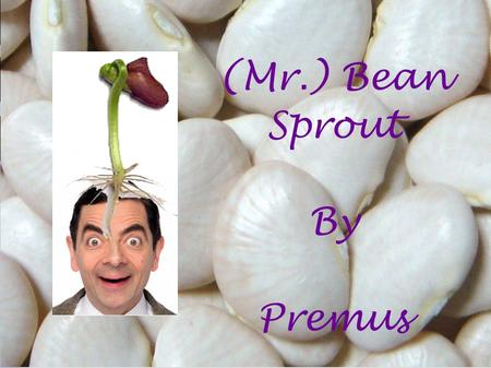 (Mr.) Bean Sprout By Premus. Big beans didn't grow Sprouts of the smallest beans grew the tallest Equal amount of water Equal amount of space Equal number.