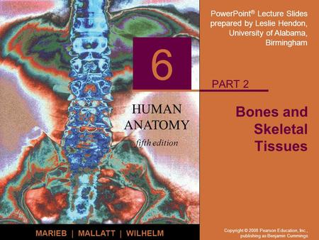 PowerPoint ® Lecture Slides prepared by Leslie Hendon, University of Alabama, Birmingham HUMAN ANATOMY fifth edition MARIEB | MALLATT | WILHELM 6 Copyright.