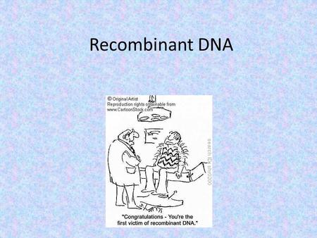 Recombinant DNA. Review Restriction enzymes cut DNA molecules at certain 'restricted' points A plasmid is also cut at the same point The ends match up.