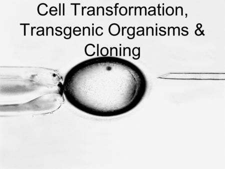 Cell Transformation, Transgenic Organisms & Cloning