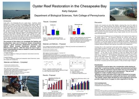 Oyster Reef Restoration in the Chesapeake Bay Kelly Galyean Department of Biological Sciences, York College of Pennsylvania Introduction Oyster reefs in.