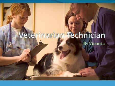 By Victoria. Job Overview A Vet Tech's day would involve aiding the Veterinarian in their tasks throughout the day. They may assist in responsibilities.