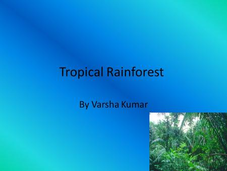 Tropical Rainforest By Varsha Kumar. Weather and Climate The tropical rainforest has a very moist warm climate. It is mostly warm, shady and muggy in.