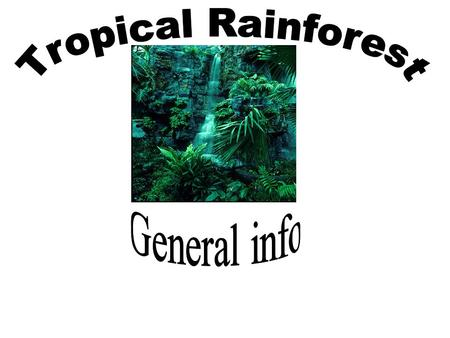 What are Tropical Rainforests? The tropical rain forest is a forest of tall trees in a region of year-round warmth. An average of 50 to 260 inches of.