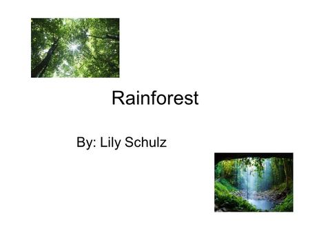 Rainforest By: Lily Schulz.