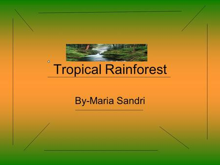 Tropical Rainforest By-Maria Sandri. Description The rainforest has many tall trees. Also it's very hot and humid. There are lots of plants like flowers,