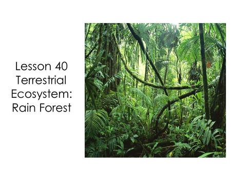 Lesson 40 Terrestrial Ecosystem: Rain Forest. In our last lesson we learned about the terrestrial ecosystem called the deciduous forest.