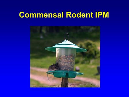 Commensal Rodent IPM. Problems Associated with Rodents Disease Food Contamination Property Damage Fires Trouble with the Health Department.