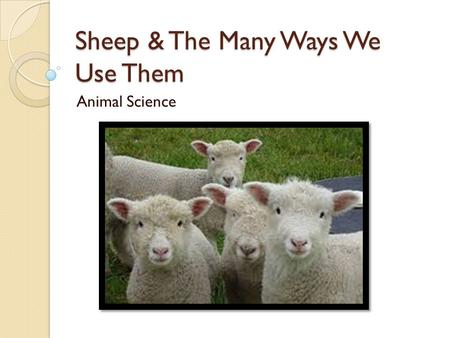 Sheep & The Many Ways We Use Them Animal Science.