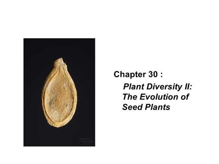 Chapter 30 : Plant Diversity II: The Evolution of Seed Plants.