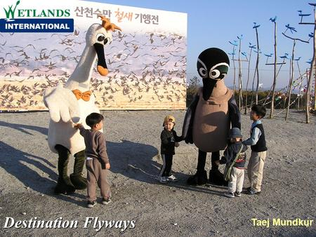 Destination Flyways Taej Mundkur. Destination Flyways The project focuses on the protection of migratory birds and their habitats and the creation of.